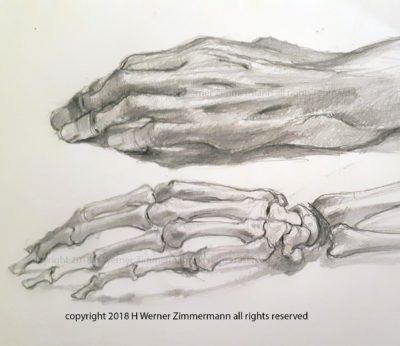 studies of cadaver and skeleton of the hand