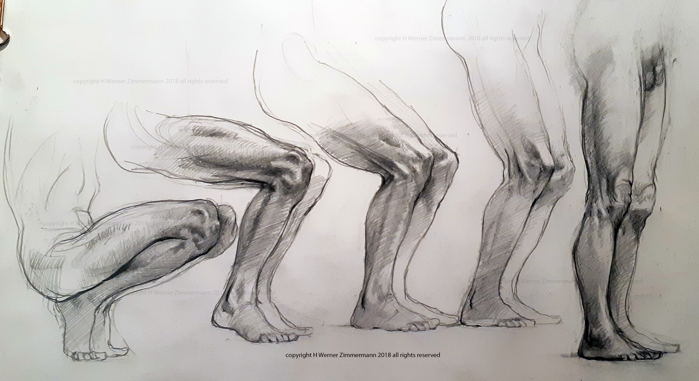 studies of the knee